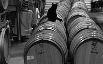 Wrath Wines Cat